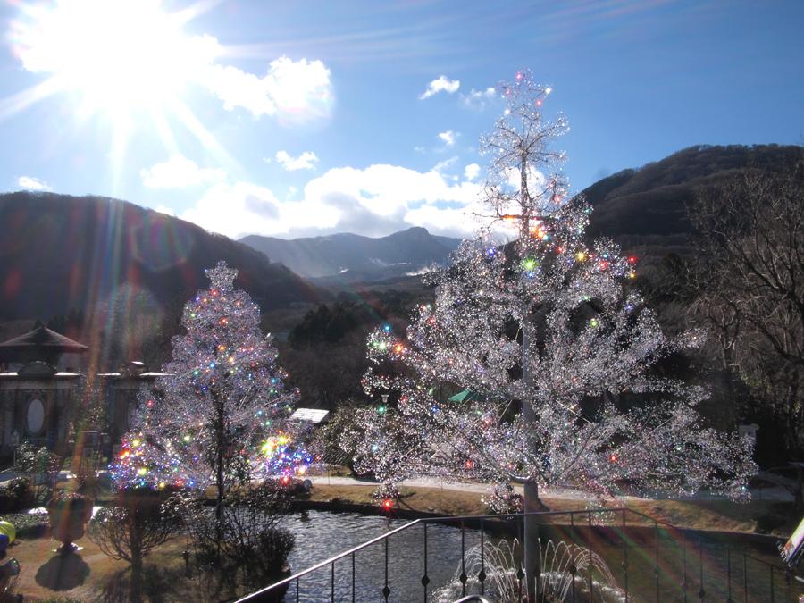 ▲クリスマスツリー 昼 -1-