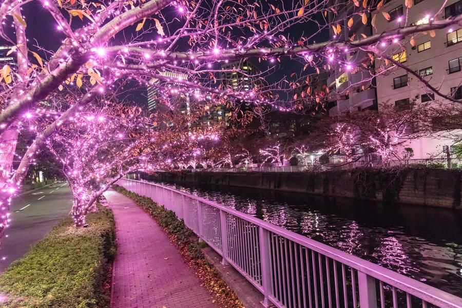 """▲イメージ画像:過去開催時の""""冬の桜(R)""""が美しい「目黒川みんなのイルミネーション」、今回はオンラインで開催"""