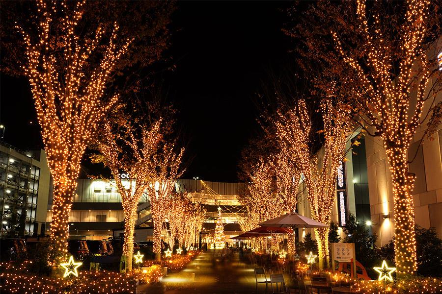 ▲けやきウォークは満天の星空のような金色の輝きで覆い尽くされる。煌めくイルミネーションとクリスマスツリーが撮れる映えフォトスポット。