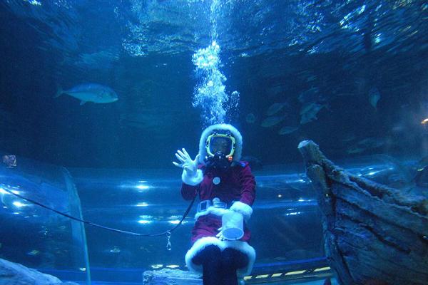 ▲クリスマス水中ショー