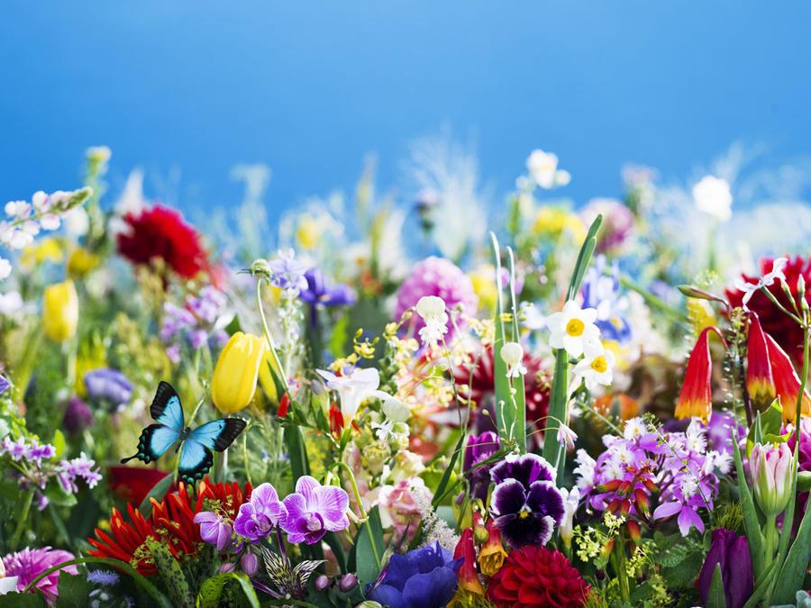 ▲earthly flowers