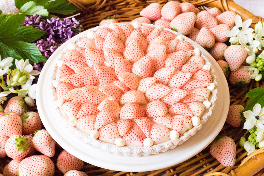 特選 白イチゴ~初恋の香り~のタルト
