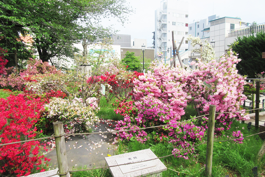 平成つつじ公園
