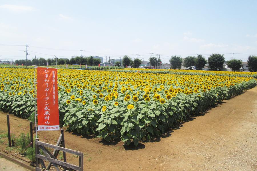 2019夏のお花畑