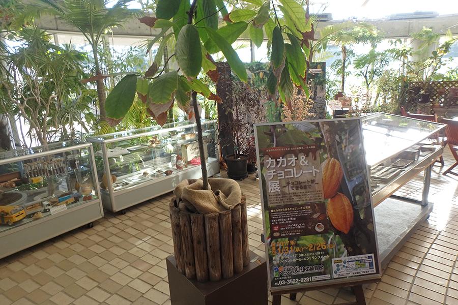 夢の島熱帯植物館 温室内
