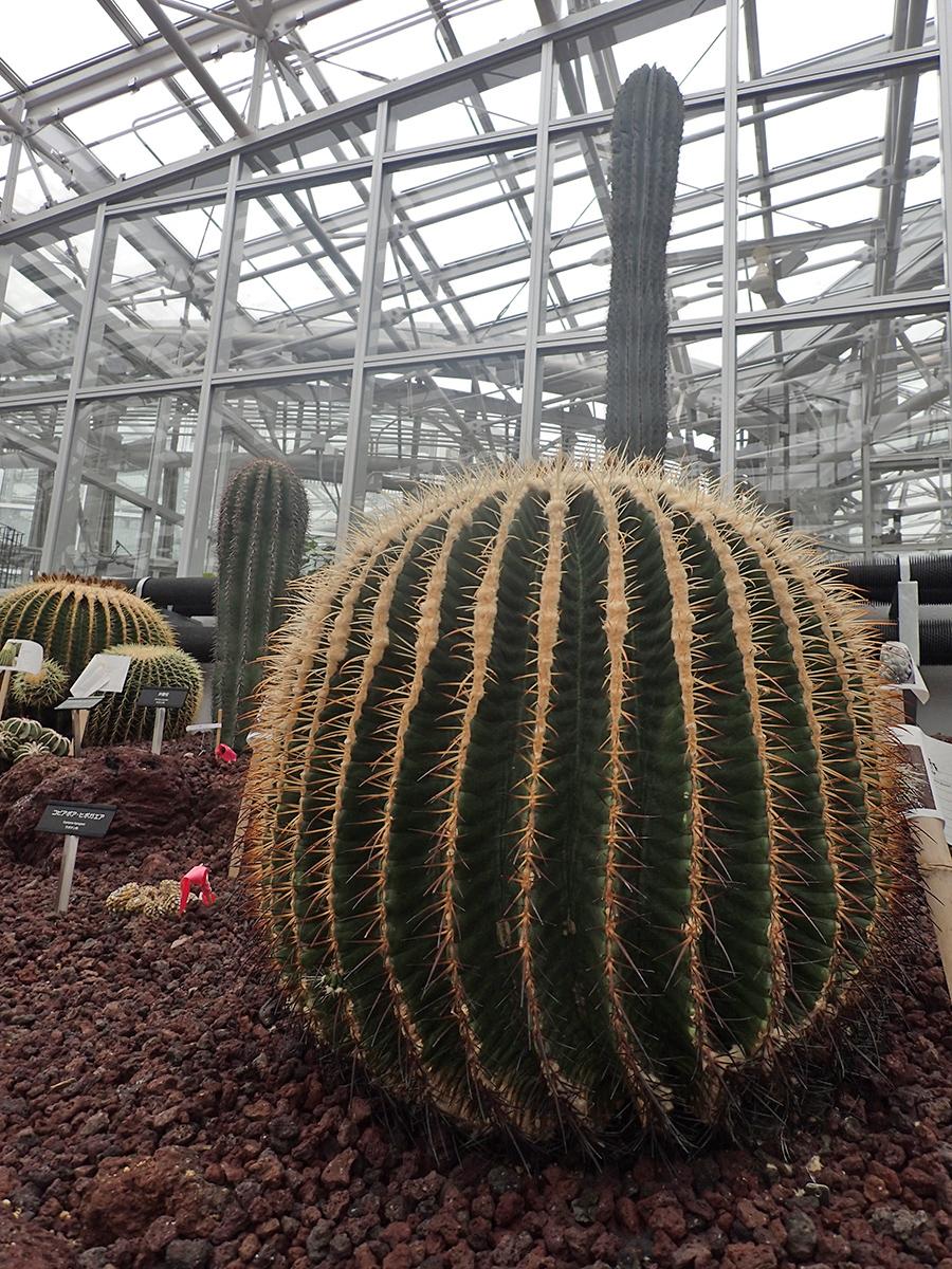 神代植物公園 温室内