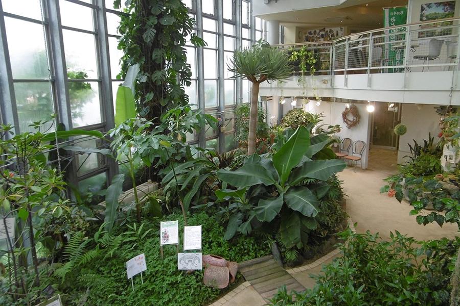 渋谷区ふれあい植物センター 温室内