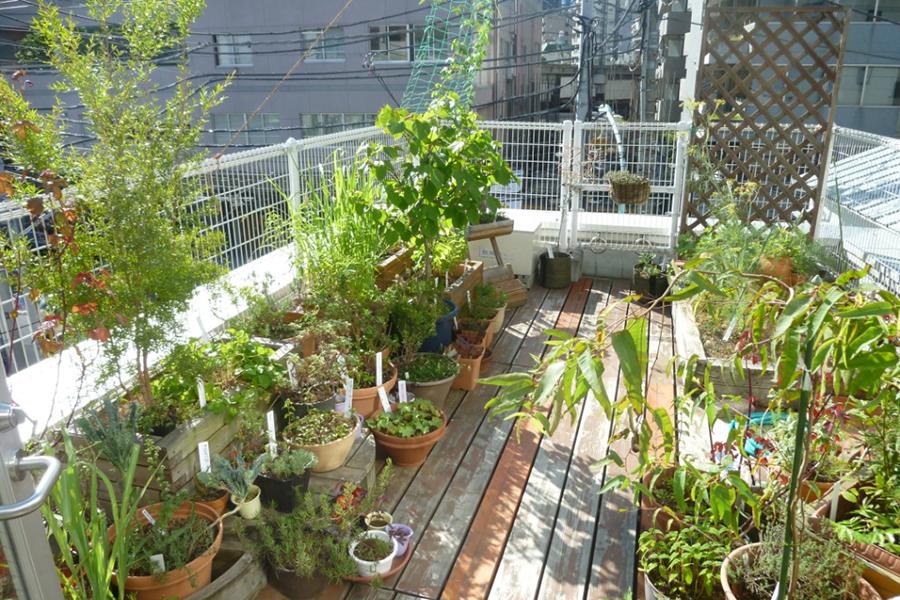 渋谷区ふれあい植物センター ハーブガーデン