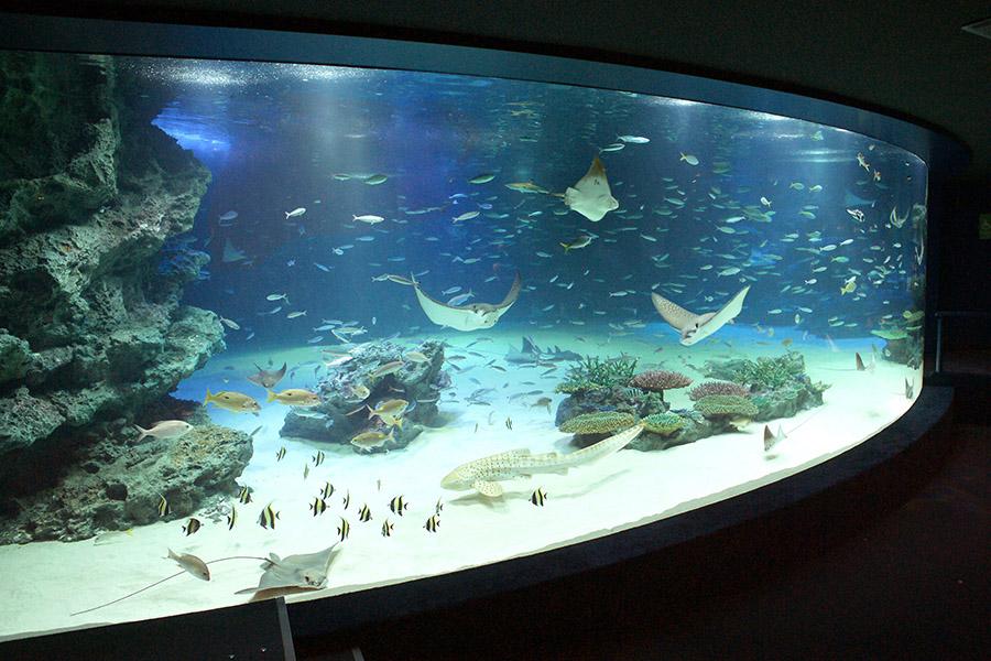 サンシャイン水族館 館内