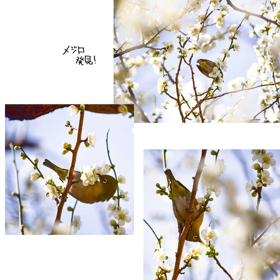 湯島天神梅まつり2018