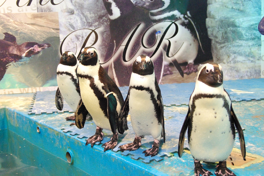 パーティーダイニング ペンギンのいるBAR 池袋店 ペンギン
