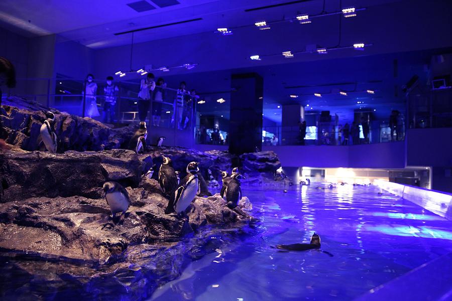 すみだ水族館 屋内開放型ペンギンプール
