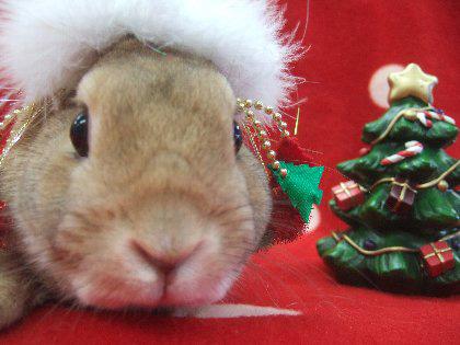 クリスマス動物園