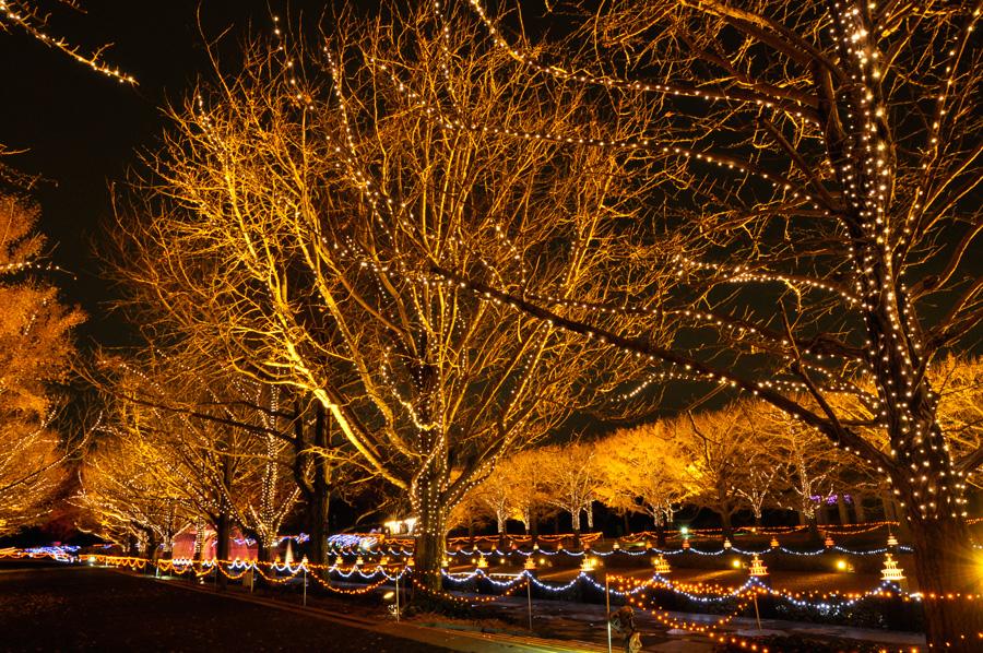 Winter Vista Illumination