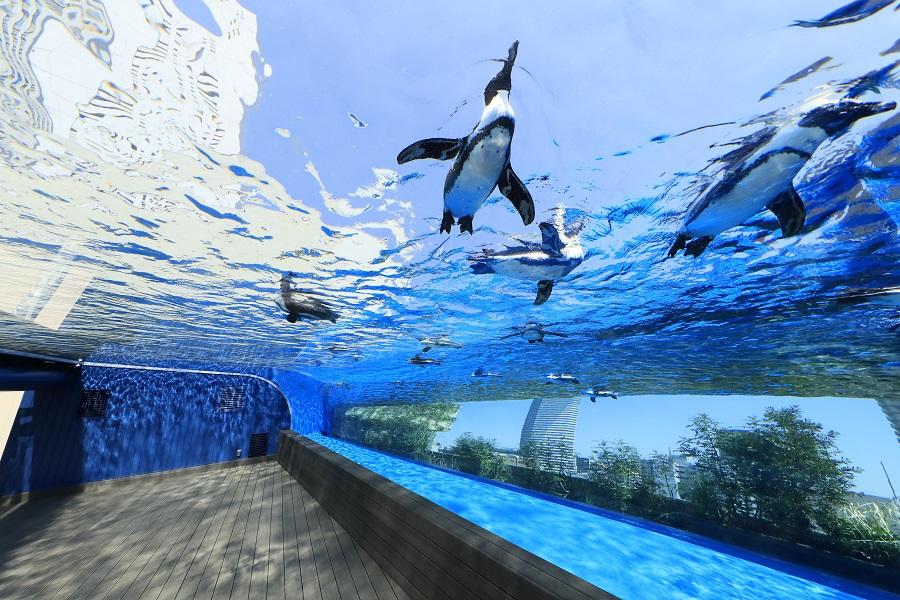 サンシャイン水族館 天空のペンギン