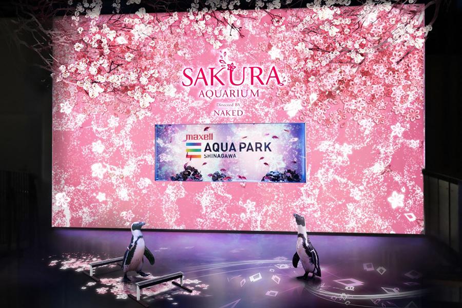 SAKURA AQUARIUM Directed BY NAKED「ペンギン」