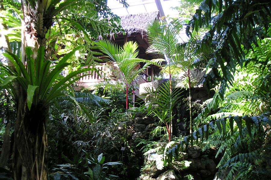 熱帯環境植物館