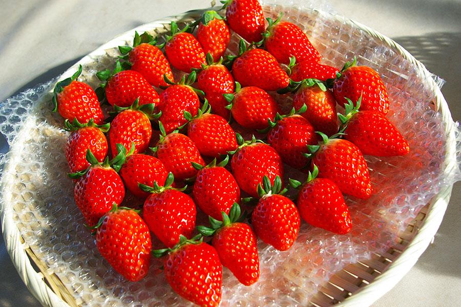 所沢北田農園 苺のマルシェ