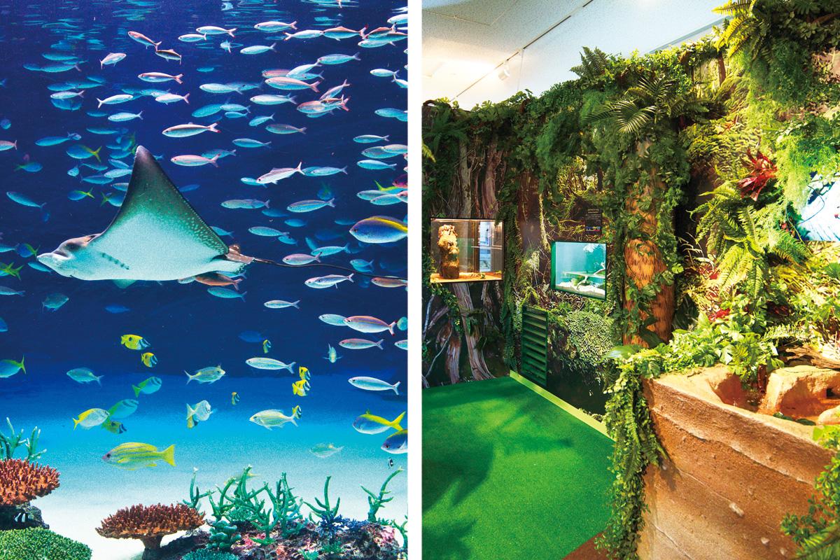 ボサンシャイン水族館