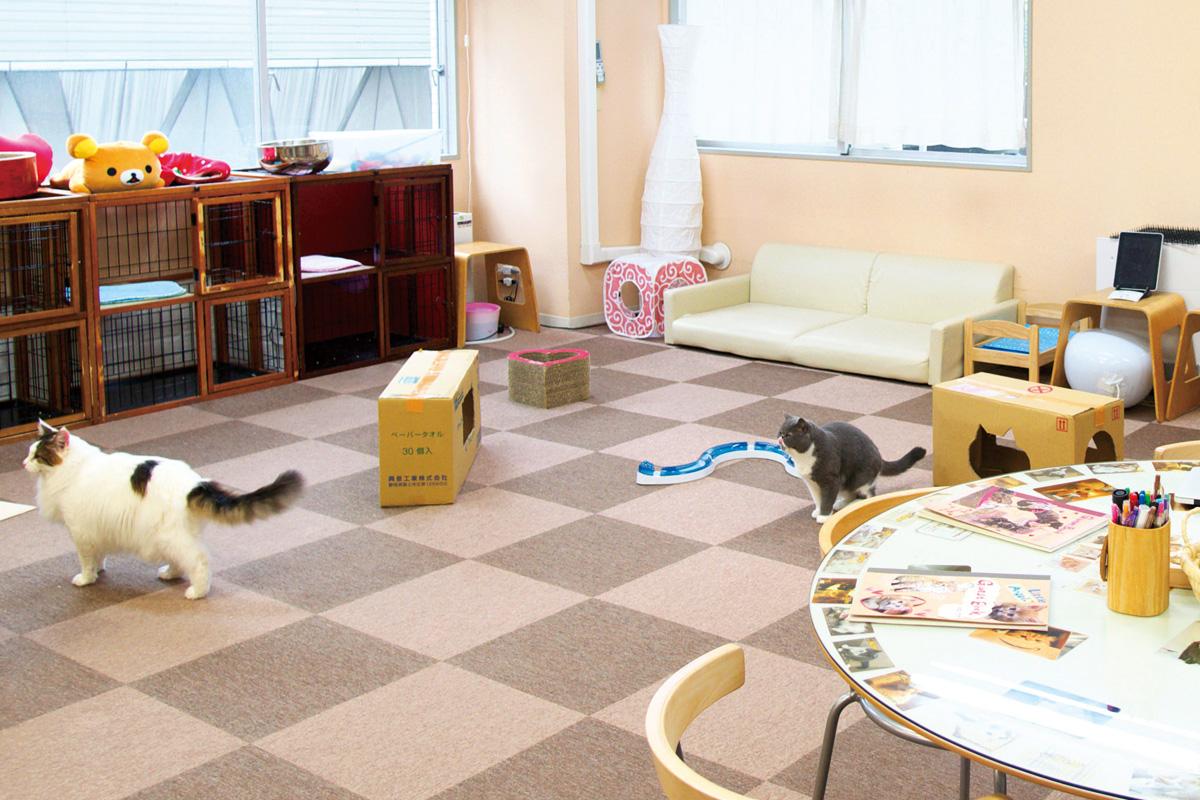 Cat Cafe ねころび