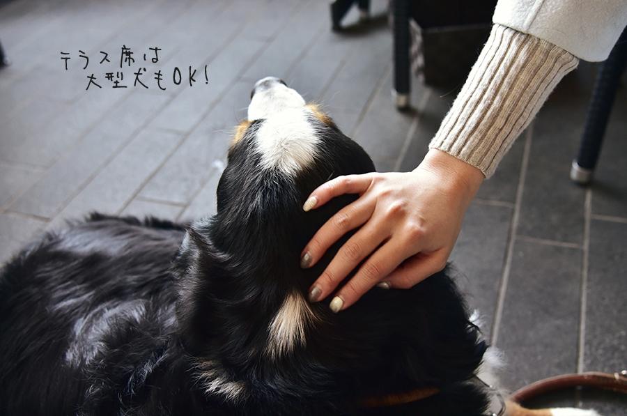 マヨルカ テラスに犬