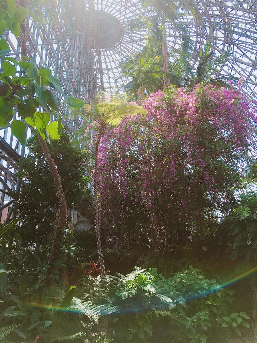 夢の島公園 熱帯植物館