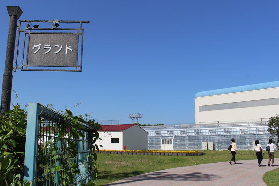 東京ストロベリーパーク グランド1