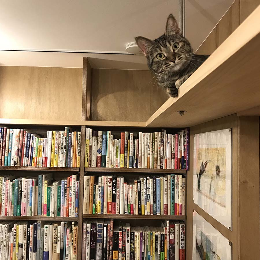 Cat's Meow Books_内観