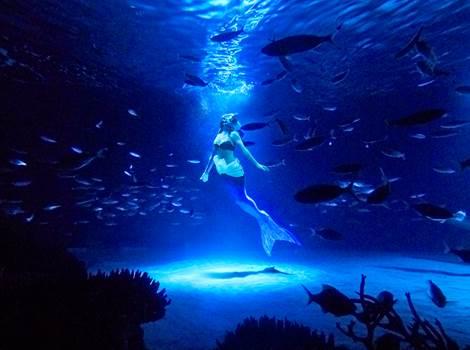 サンシャイン水族館 スペシャル水中パフォーマンス「トワイライトラグーン」