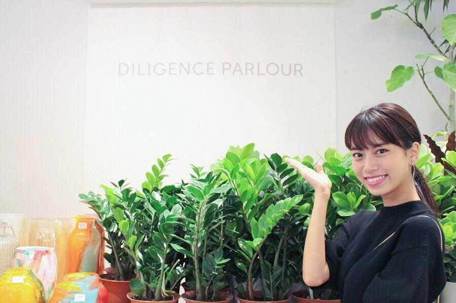 DILIGENCE PARLOUR