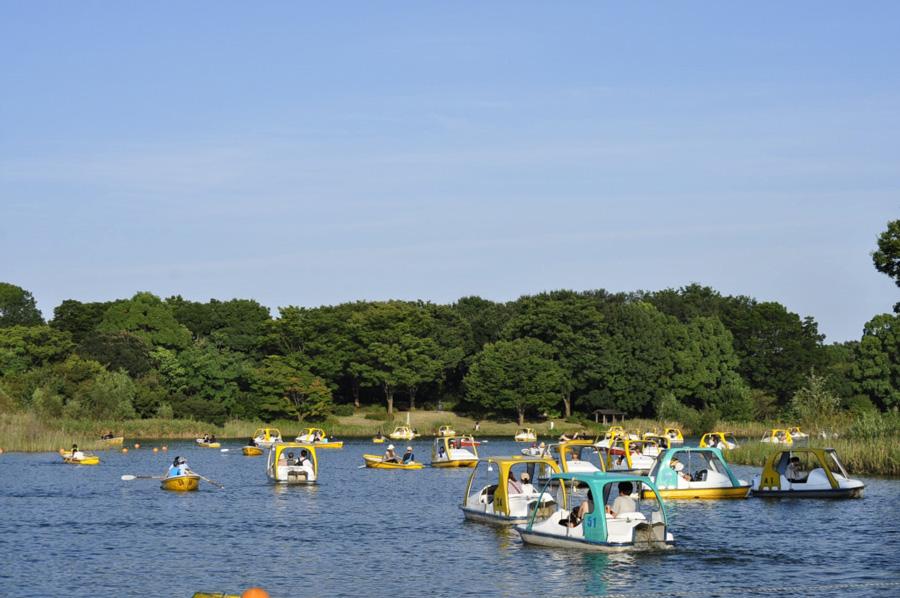 国営昭和記念公園水鳥の池