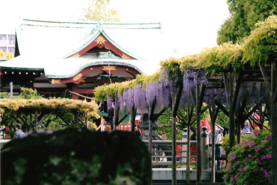 亀戸天神社 藤まつり 学業講祭 2019