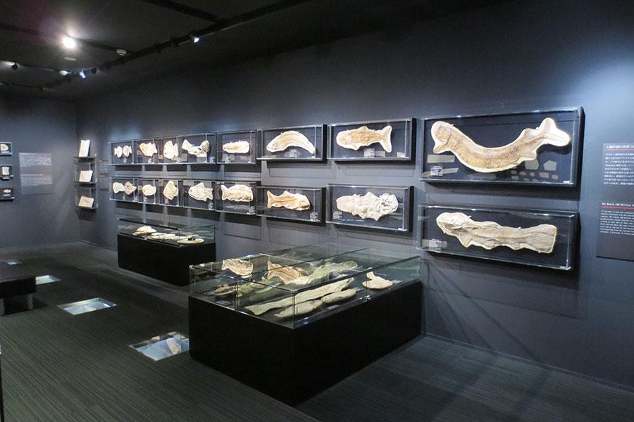 学校法人 城西大学水田記念博物館大石化石ギャラリー