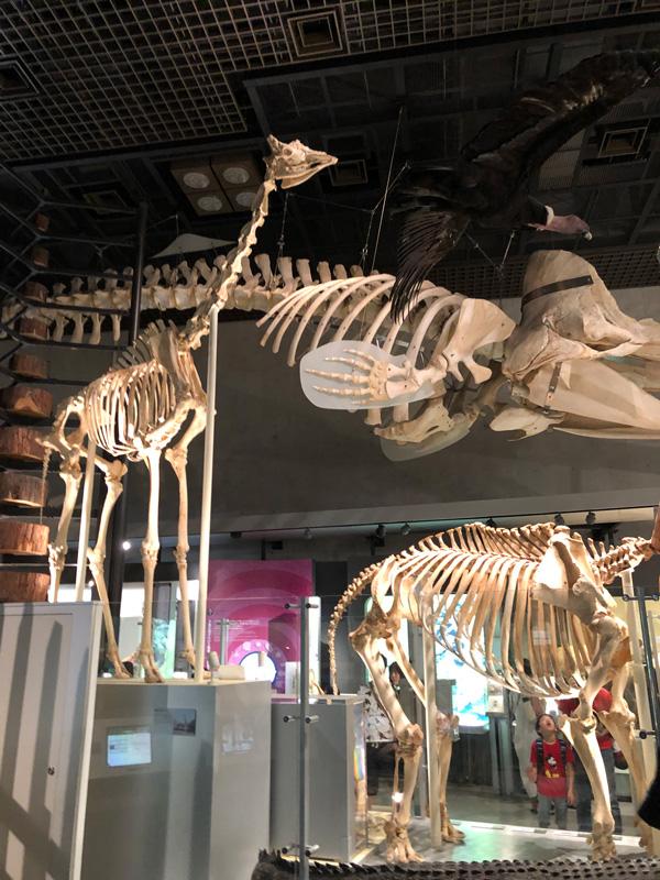 国立科学博物館館内3