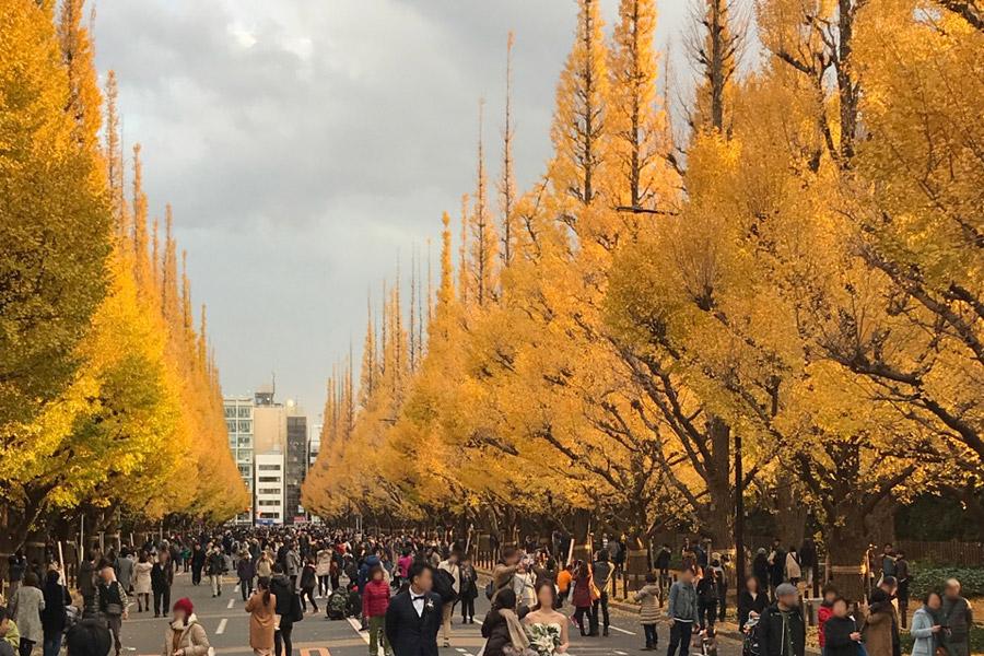 神宮外苑いちょう祭り 2019