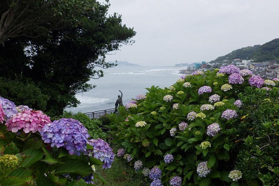 多古町あじさい公園/あじさい遊歩道