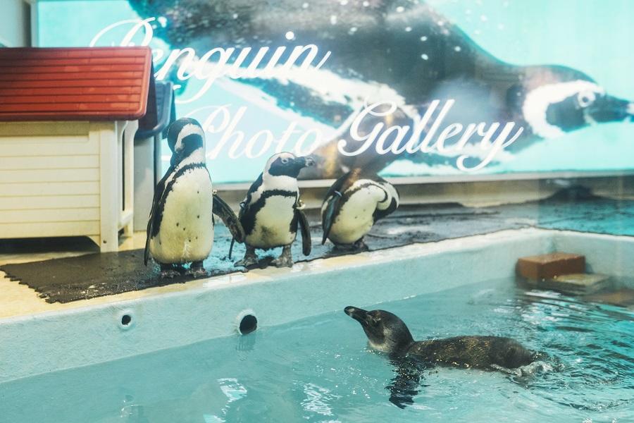 ペンギンのいるBAR 池袋