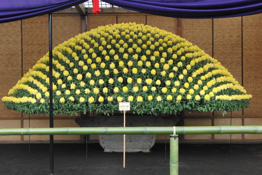 新宿御苑 菊花壇展