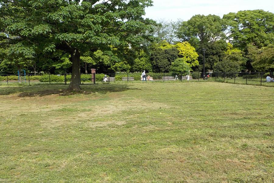 木場公園ドッグラン