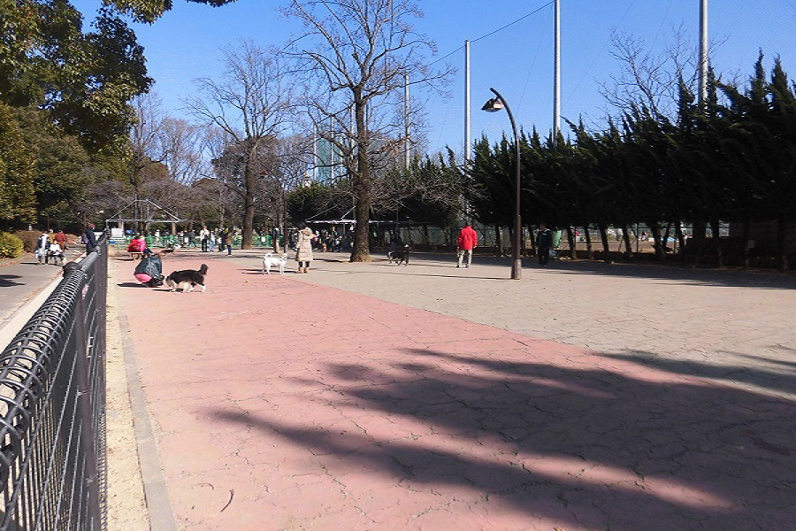 駒沢オリンピック公園ドッグラン
