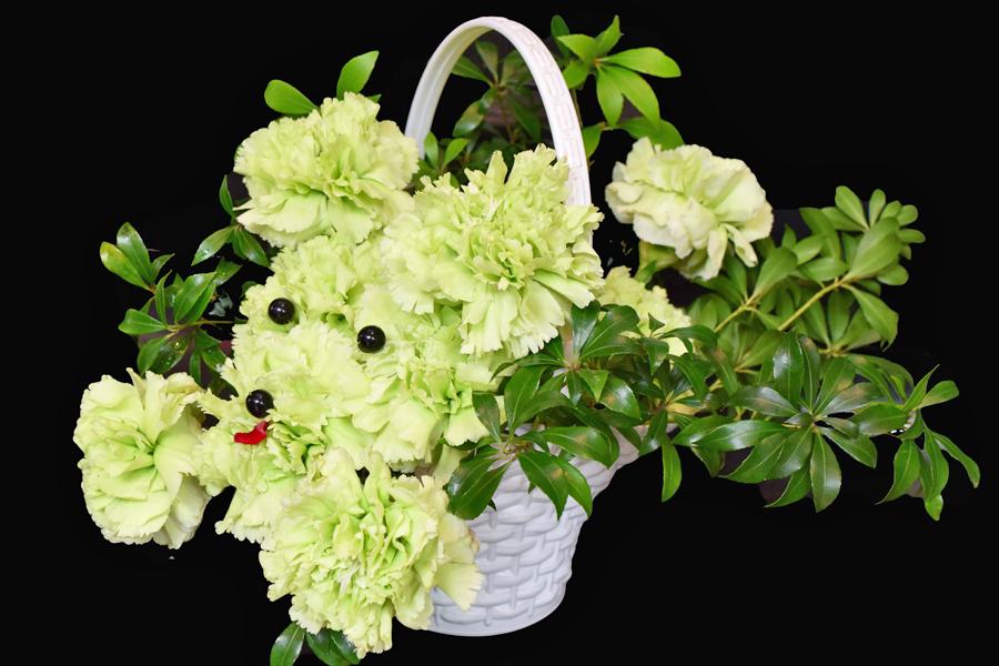お花でつくるプードルアレンジメント!