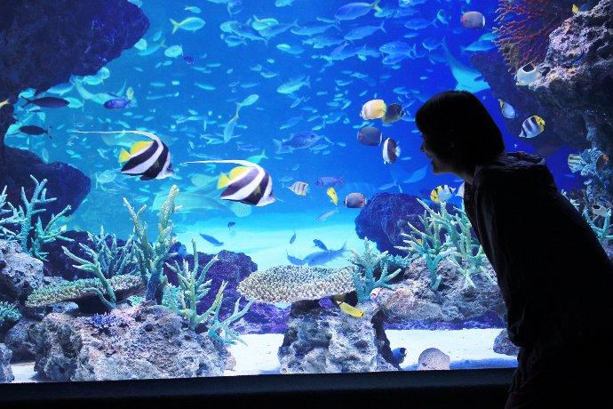 貸し切り気分で楽しめる水族館鑑賞。少人数での鑑賞なので、魚と一緒に泳いでいるような気分に。