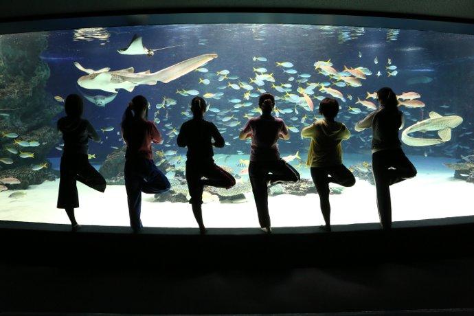 大水槽「サンシャインラグーン」を眺めながらの女性限定ヨガレッスンは、3月も開催予定。