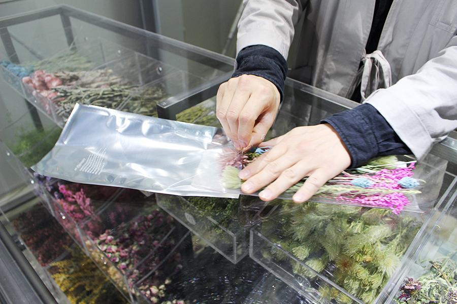 EW.Pharmacy お花