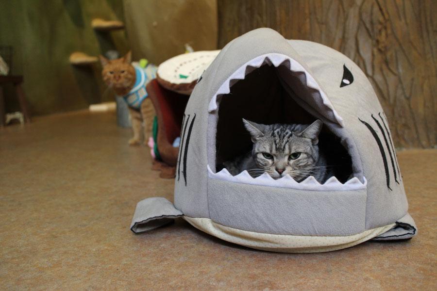 てまりのおうち 猫